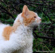 La Perm cat