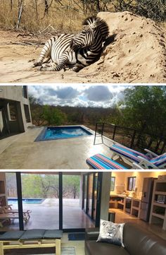Lionsview Private Lodge is ideally set on the borders of the Lionspruit reserve where a variety of wildlife, including lions, can often be seen or heard from within the house.  Click on the link to book your wildlife getaway!  #TravelTuesday #MarlothPark #Mpumalanga #TravelGround #WeDoTourism