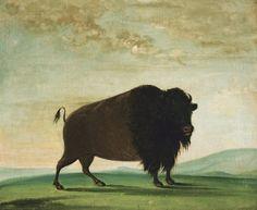 George Catlin's American Buffalo