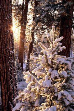 Diy Diamond Painting winter scenery snow Full Rhinestones Cross Stitch Crystal diamond Mosaic Embroidery tree Home Decor Winter Szenen, Winter Love, Winter Magic, Winter Sunset, Winter White, Winter's Tale, Snowy Day, Snowy Woods, Snowy Forest