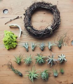 Getting Crafty for the Holidays | Airplant Wreath | Pigment