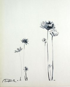 Daisies Flowers- Original Drawing, Black and White, Art Pen Drawing, Nature…