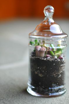 A little Terrarium | #DIY