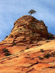 A Tree decided to plant roots at the top of a rock formation in Zion National Park, Utah.  Photo and description by:  Jm Crupi.