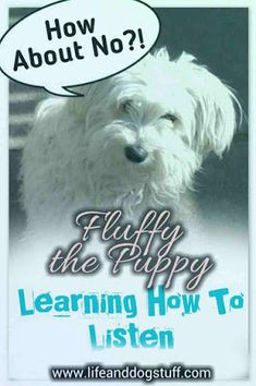 Fluffy the Puppy Learning How to Listen | Life and Dog Stuff #dogs #doglovers #dogmom #doghumor #humor #funny #crazydoglady #dogblog #blogpost #pets