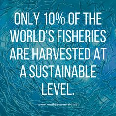 sustainability, seafood, ecofriendly, green living, fishing, marine biology, fisheries Seafood Stock, Seafood Market, Seafood Restaurant, Colorful Fish, Tropical Fish, Sustainable Seafood, Monterey Bay Aquarium, Marine Conservation, Help The Environment