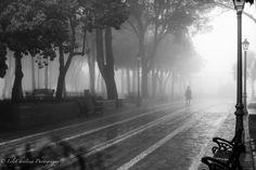 lilychristina photography, nature picture, fog, luontokuvaus, luontokuva, espanja, fuengirola Nature Pictures, Country Roads, Amazing, Photography, Photograph, Fotografie, Photoshoot, Fotografia
