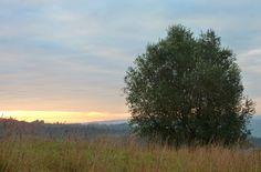 Lonesome Tree.
