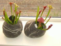 brigittesquartier ;-) gefilzte Schalen mit fleischfressenden Pflanzen