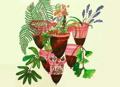 Menstrual Cups and Plants