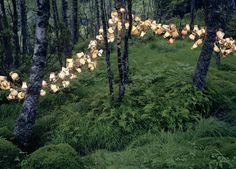 Norwegian artist Rune Guneriussen's lighting installations in the forest (how darling!)