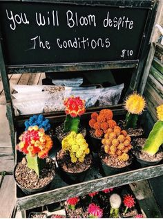See more of kindagirly's content on VSCO. Cactus, Plants Are Friends, Happy Vibes, Summer Aesthetic, Dog Treat Recipes, Decoration, Flower Power, Just In Case, Are You Happy
