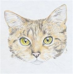 How to Draw a Cat using Caran D'Ache Supracolor Soft coloured pencils