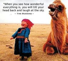 Humor/jokes/quotes/laughs