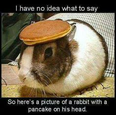 AUDITIONING FOR THE EASTER PARADE? :-D