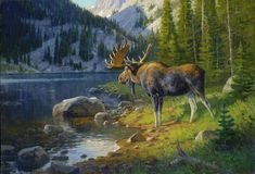 All information about Moose Painting. Pictures of Moose Painting and many more. Wildlife Paintings, Wildlife Art, Animal Paintings, Moose Pictures, Art Pictures, Deer Art, Moose Art, Hunting Art, Moose Hunting