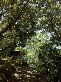 Forest of Birds, Tateyama city by Ippei Fukushima, via Flickr