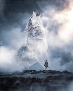 Spirit of the wolf You who wanders the wild lands You who stalks in silent shadows You who runs and leaps between the… Wolf Photos, Wolf Pictures, Wolf Love, Wolves And Women, Giant Animals, Wolf Artwork, Wolf Spirit Animal, Wolf Photography, Fantasy Wolf