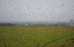 Una tarde lluviosa: Cada gota es diferente, y en una melancólica tarde también se puede encontrar la belleza Tomada en: Aguascalientes - Aguascalientes - México @Softtek #photobook