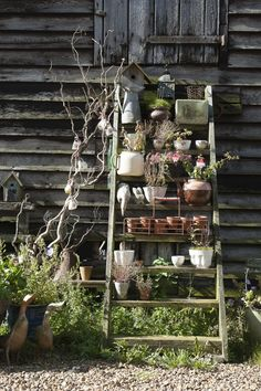 Disused stairs have a new lease of life as shelves for plants