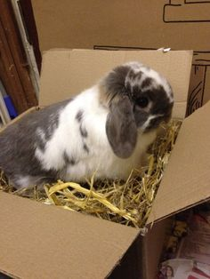 Patch the rabbit enjoying his latest delivery packed with toys and treats and of course making full use of our Forage Box packaging!