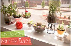 window terrarium
