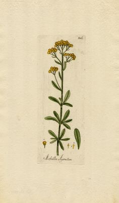 this herb is good for divination, it makes a nice ingredient for dream pillows and for divinatory incense. Burning yarrow is said to produce visions of snakes.   In the past, yarrow was used as a protectant. It was strewn across the threshold to keep out evil and worn to protect against hexes. It was tied to an infant's cradle to protect it from those who might try to steal its soul.