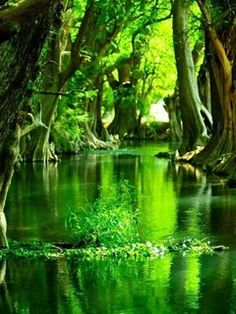 Find images and videos about nature, green and water on We Heart It - the app to get lost in what you love. Green Nature Wallpaper, Iphone Wallpaper Green, Black Wallpaper, Wallpaper Desktop, Nature Green, Image Nature, Nature Sounds, World Of Color, Science And Nature
