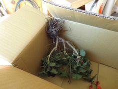 geranium box1