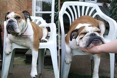"""14 Pets Who Are Taking Laziness To A Whole New Level #refinery29  http://www.refinery29.com/the-dodo/162#slide-1  """"I want to stay seated, but I hate having to lift my head...oh, lovely, thank you."""""""