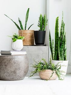 Potted foliage in marble pots
