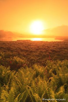 Morning of wetlands