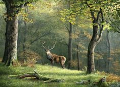 Wildlife Paintings by British-Wildlife Artist Nigel Artingstall Wildlife Paintings, Wildlife Art, Animal Paintings, Landscape Paintings, Chamois, Kitsch, Deer Illustration, Bike Photoshoot, Camping Activities