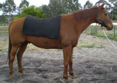 felted alpaca saddle blankets made to order at the only spinning mill in WA www.thefibreofthegods.com 08 9574 5577
