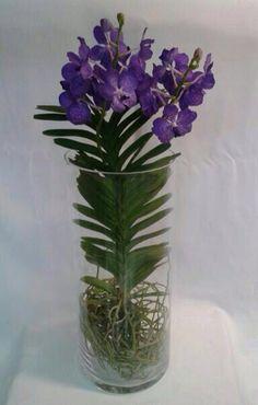 www.ingeniofloral.com