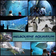 The Melbourne Aquarium Melbourne Australia