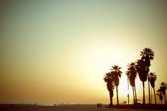 sunset. palm trees. california.