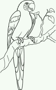 coloring page of a macaw Parrot, Lovely Parrot Coloring Page Lovely Parrot Coloring PageFull is part of Bird coloring pages - Bird Coloring Pages, Online Coloring Pages, Free Printable Coloring Pages, Adult Coloring Pages, Coloring Books, Bird Drawings, Art Drawings Sketches, Hand Embroidery Designs, Embroidery Patterns