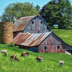 Brushy Hollow loves old barns! Country Barns, Country Life, Country Living, Country Roads, Country Charm, Cabana, Pictures Of America, Barn Pictures, Nature Pictures