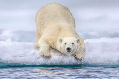 El 2016 en fotos de animales 4 - Maldito Insolente