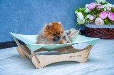 Pomeranian, Yorkie, Dog Hammock, Dog Furniture, Cat Beds, Great Movies, Dog Bed, Small Dogs, Funny Animals