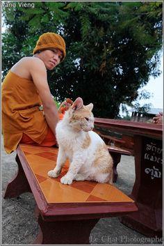 chat et bonze Laotien