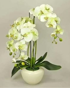 Discover recipes, home ideas, style inspiration and other ideas to try. Orchid Flower Arrangements, Orchid Centerpieces, Phalaenopsis Orchid, Orchid Plants, Moth Orchid, Flowers Nature, Beautiful Flowers, Orchid Roots, Artificial Orchids