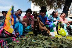 Campesinos exigen la despenalización de la hoja de coca