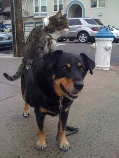 Interesting Companions:  Greg Pike's dog Booger, cat Kitty, and white mice live together in Bisbee, Arizona.     - photo from Reuters