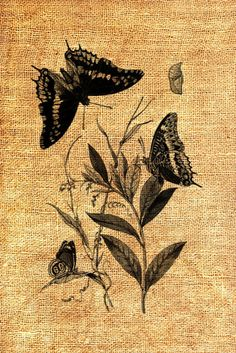 Butterflys on Weeds Vintage Digital Image by tspVintageDesigns, $1.00