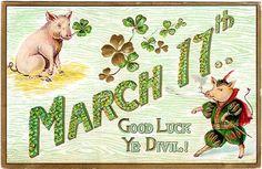 RARE St Patrick's Day Postcard 1909 Paddy's Pig Good Luck You Devil Shamrocks | eBay