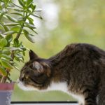 Sooner or later every gardener will engage in a battle to protect their prized seedlings from the curious snouts, paws and claws of domestic (and wild) dogs. Find out 5 ways to deter them in this article.