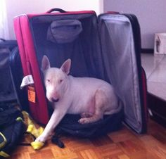 Think you're going somewhere without me?  Think again human.
