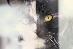 cat through window